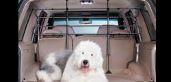 Vacanze estive: non abbandonare il tuo cane, portalo in viaggio con te